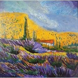 Lavanders in Provence