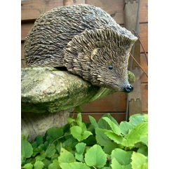 Nosy Hedgehog - Handmade in stoneware clay