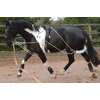 Horse Tack/Training Aids